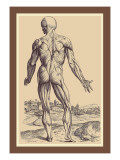 The Ninth Plate of the Muscles Wandtattoo von Andreas Vesalius