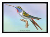 Hummingbird: Trochilus Vesper Decalcomania da muro di Sir William Jardine