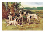 Gascon-Saintongeois Hounds of the Virelade Type Wall Decal by Baron Karl Reille