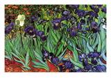 Iris Väggdekal av Vincent van Gogh