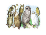 Hoot of Owls Veggoverføringsbilde av Theodore Jasper