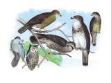 Owls, Buzzards, and Peregrine Falcon Veggoverføringsbilde av Theodore Jasper