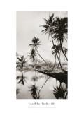 Coco Palms, Honolulu, 1935 Adesivo de parede