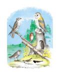 American Lanier Falcon Veggoverføringsbilde av Theodore Jasper