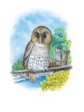 The Barred Owl Veggoverføringsbilde av Theodore Jasper