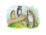 Short-Eared Owl and Screech Owl Wallstickers af Theodore Jasper