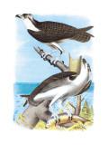 The Fish Hawk Veggoverføringsbilde av Theodore Jasper