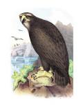 Sea Eagle Veggoverføringsbilde av Theodore Jasper