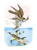 The Wandering Falcon Veggoverføringsbilde av Theodore Jasper