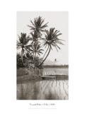 Coco Palms, Oahu, 1926 Adesivo de parede