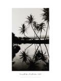 Coconut Palms, Pearl Harbor, Hawaii, 1927 Wall Decal