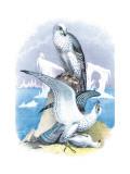 Jer-Falcon Veggoverføringsbilde av Theodore Jasper