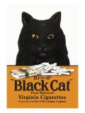Black Cat Pure Matured Virginia Cigarettes Decalcomania da muro
