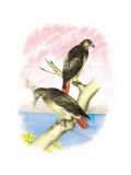 Red-Tailed Hawks Veggoverføringsbilde av Theodore Jasper