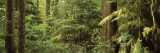 Trees in a Forest, Rockport State Park, Rockport, Washington, USA Wallstickers af Panoramic Images,