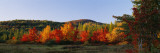 Trees in the Forest, Adirondack Mountains, Essex County, New York State, USA Decalcomania da muro
