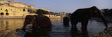 Three Elephants in the River, Amber Fort, Jaipur, Rajasthan, India Wallstickers af Panoramic Images,