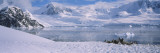 Gentoo Penguins on a Landscape, Neko Harbor, Antarctica Wallstickers af Panoramic Images,