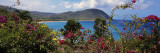 Tropical Flowers at the Seaside, Deshaies Beach, Deshaies, Guadeloupe Decalcomania da muro di Panoramic Images,