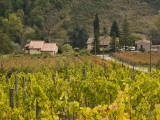 Vineyards Near Greve in Chianti, Seen from Hamlet of Borgo Le Mura Fotografie-Druck von Glenn Van Der Knijff