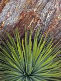 Yucca and Stone Fotografie-Druck von Douglas Steakley