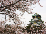 Osaka Castle with Cherry Blossoms Stretched Canvas Print by John Banagan