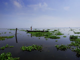 Canoe on Kerala's Backwaters Photographic Print by Felix Hug