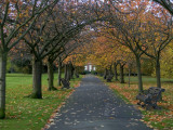 Greenwich Park in Autumn Photographic Print by Doug McKinlay