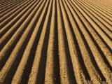 Ploughed Field Fotografisk trykk av Douglas Steakley