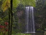 Milla Millaa Falls Fotografie-Druck von Glenn Van Der Knijff
