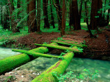 Bridge Covered in Moss over Little Sur River Fotografisk trykk av Douglas Steakley