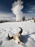 Buffalo Skull and Old Faithful Geyser Fotografisk trykk av Douglas Steakley