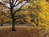 Autumn in Greenwich Park Impressão fotográfica por Doug McKinlay