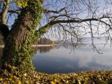 Tree on Shore of the Bodensee (Lake Constance) Fotografie-Druck von Glenn Van Der Knijff