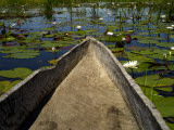 Mokoro, Traditional Dugout Canoe, Among Lilies on Delta Photographic Print by Doug McKinlay