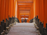 Orange-Red Gates (Tori) Lining Pathways of Fushimi-Inari-Taisha Shrine Photographic Print by Frank Carter