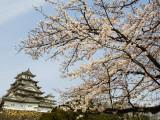 Himeji-Jo (Castle) and Blossoms Reproduction photographique par John Banagan