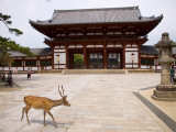 Deer Strolling Past Entrance Gate to Todai-Ji (Temple) Fotografie-Druck von Christopher Groenhout