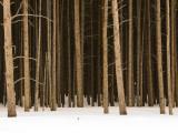 Trees in Winter Fotografie-Druck von Douglas Steakley