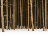 Trees in Winter Photographic Print by Douglas Steakley