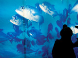 Excited School Children Gazing at Fish at Osaka Aquarium Fotografisk tryk af Antony Giblin