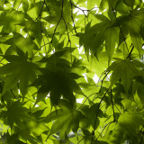 Leaves and Patterns at Hokkaido University Forest Fotografisk tryk af Shayne Hill