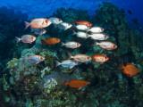 Big Eye Squirrel Fish Shoal, St. John's Reef Fotografie-Druck von Mark Webster
