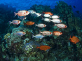 Big Eye Squirrel Fish Shoal, St. John's Reef Photographic Print by Mark Webster