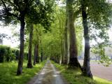 Avenue of Trees Leading Near Vitrac, Dordogne Valley Fotografie-Druck von Barbara Van Zanten