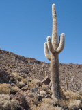 Cactus at Isla Pescado Photographic Print by Alfredo Maiquez