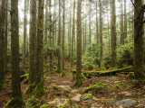 Forest Along Arakawa Trail to Jomon Sugui (Giant Tree) Fotografisk tryk af Shayne Hill