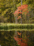 Autumn Colour and Reflection in Pond, Hokkaido University Forest Fotografisk tryk af Shayne Hill