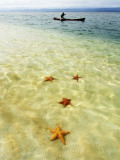 Sea Stars in Tropical Water at Star Beach Photographic Print by Alfredo Maiquez