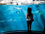 Young Child Gazing at Fish at Osaka Aquarium Fotografisk tryk af Antony Giblin